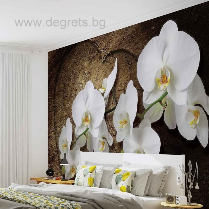 Фототапет Орхидея бяла