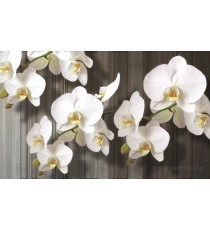 Фототапет Орхидея бяла 2 XL