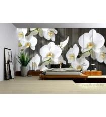 Фототапет Орхидея бяла 2 L