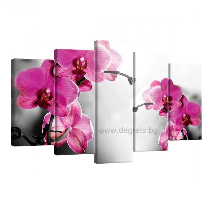 Картина Канава Орхидеи циклама 1 Сет 5 части