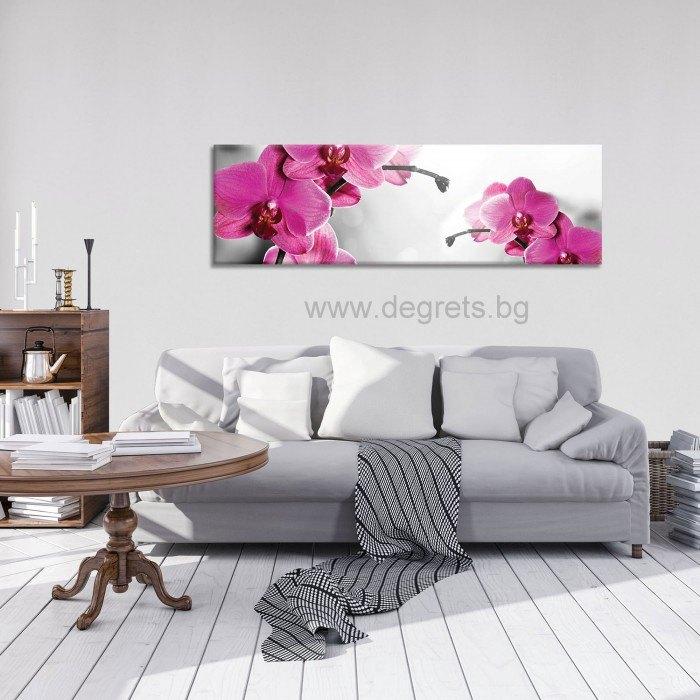 Картина Канава Орхидеи Циклама 1 XL