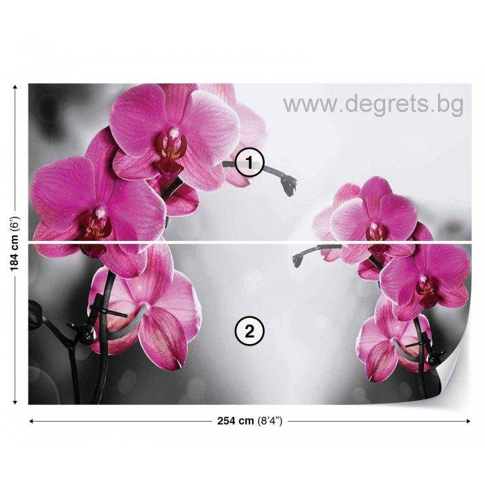 Фототапет Орхидеи циклама 1 L 1