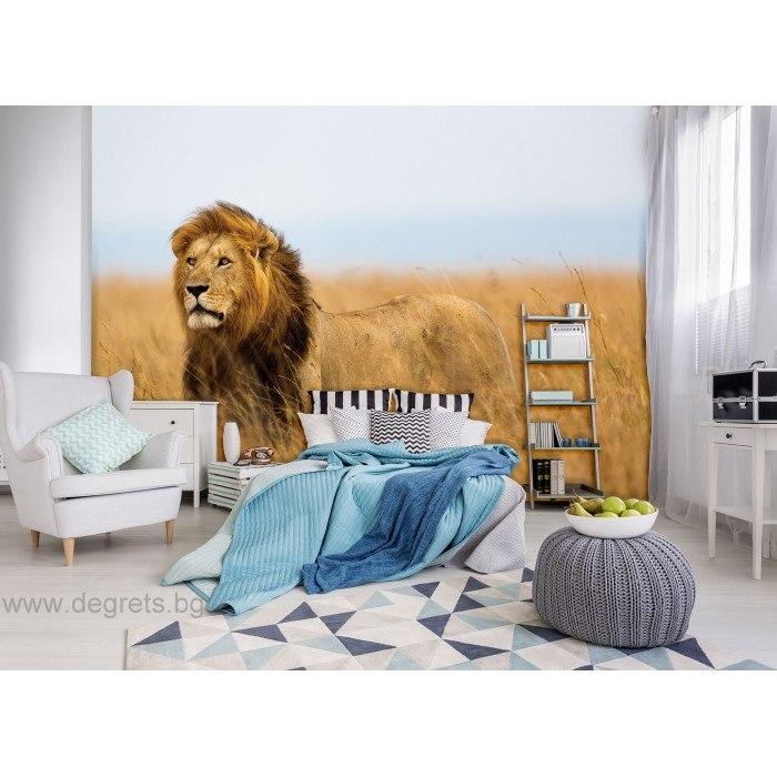 Фототапет Лъв в саваната