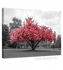Картина Канава Розов цвят