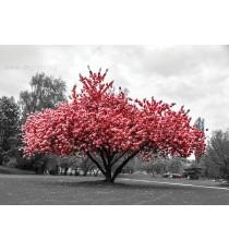 Фототапет Розов цвят