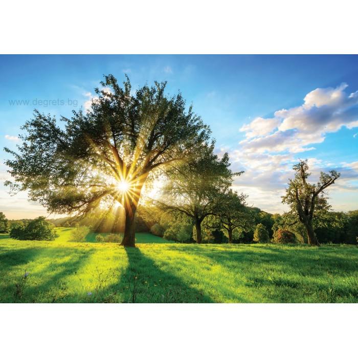 Фототапет Слънце зад дървото