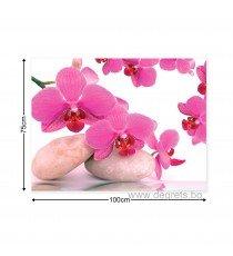Картина Канава Орхидеи Дзен 1