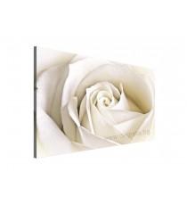 Картина Канава Бяла роза