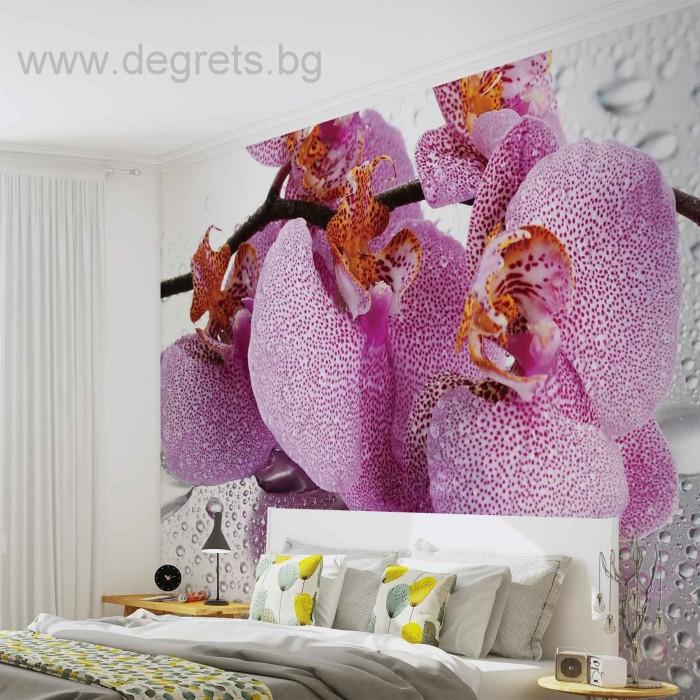 Фототапет Орхидея капки
