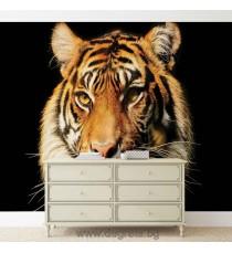 Фототапет Тигър 2 3D