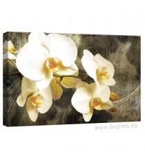 Картина Канава Орхидея 8