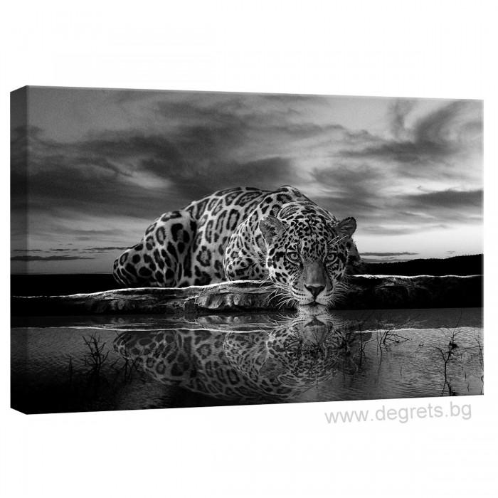 Картина Канава Леопард 1 S