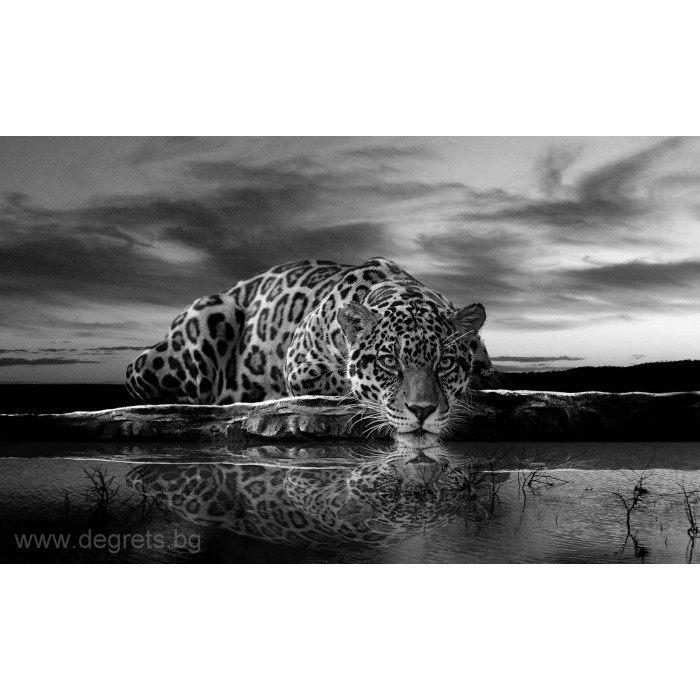 Фототапет Леопард 1