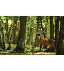 Фототапет Елен в гората