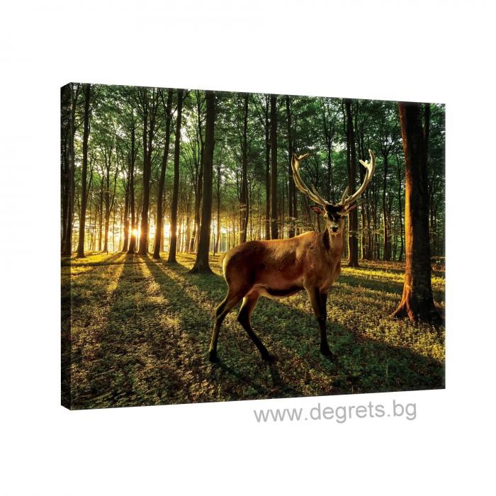 Картина Канава Елен в гората L