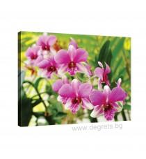 Картина Канава Орхидея 3