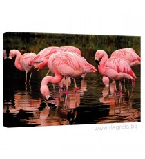 Картина Канава Фламинго 2