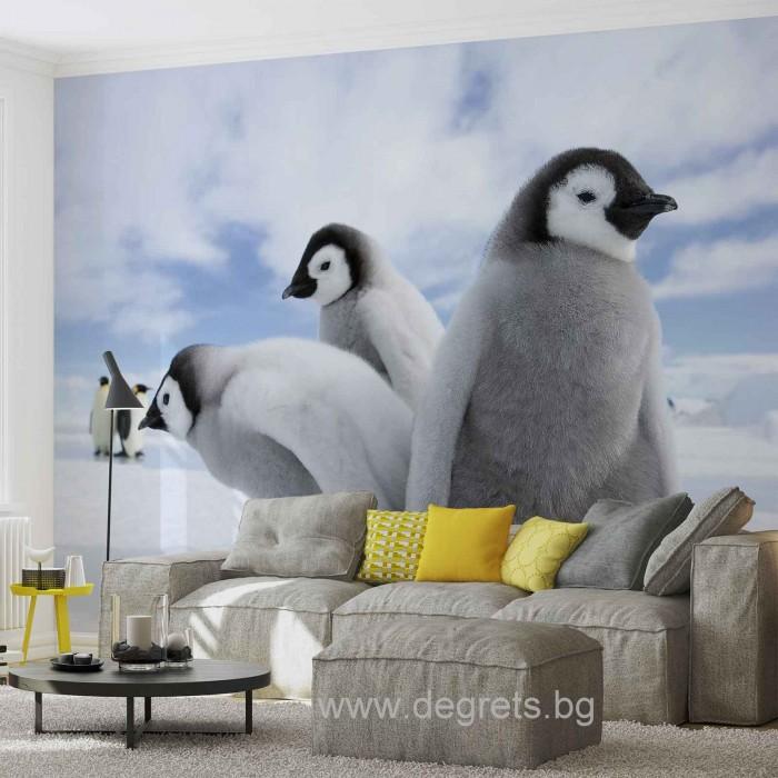 Фототапет Пингвини
