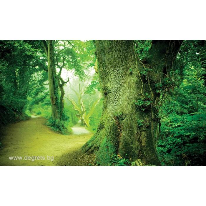 Фототапет Път в гората 3D