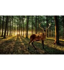 Фототапет Елен в гората - залез L