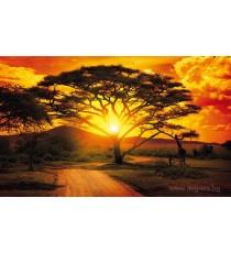 Фототапет Залез в Африка