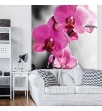 Фототапет Орхидеи циклама 1 L 2