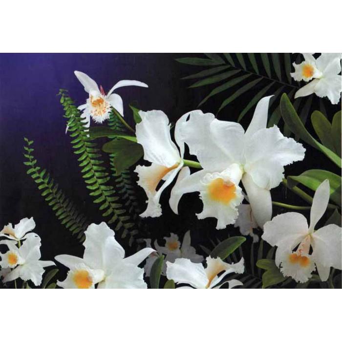 Фототапет Дива орхидея