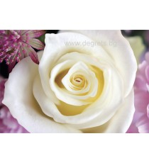 Фототапет Бяла роза