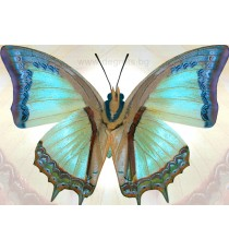 Фототапет Пеперуда