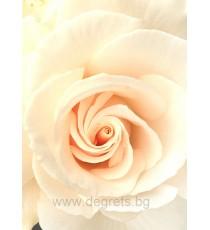 Фототапет Бежова роза