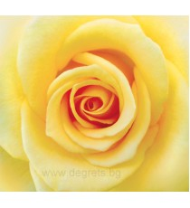 Фототапет с Жълта роза