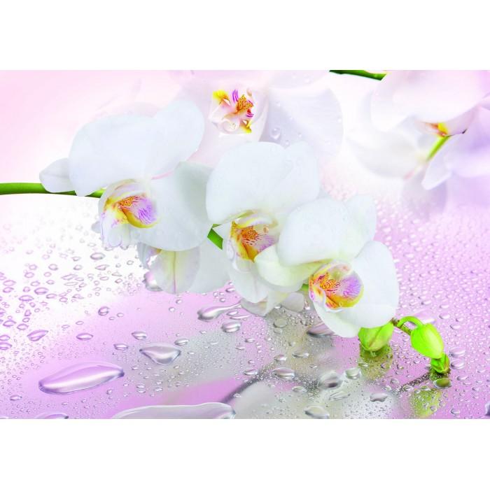 Фототапет Орхидея мираж