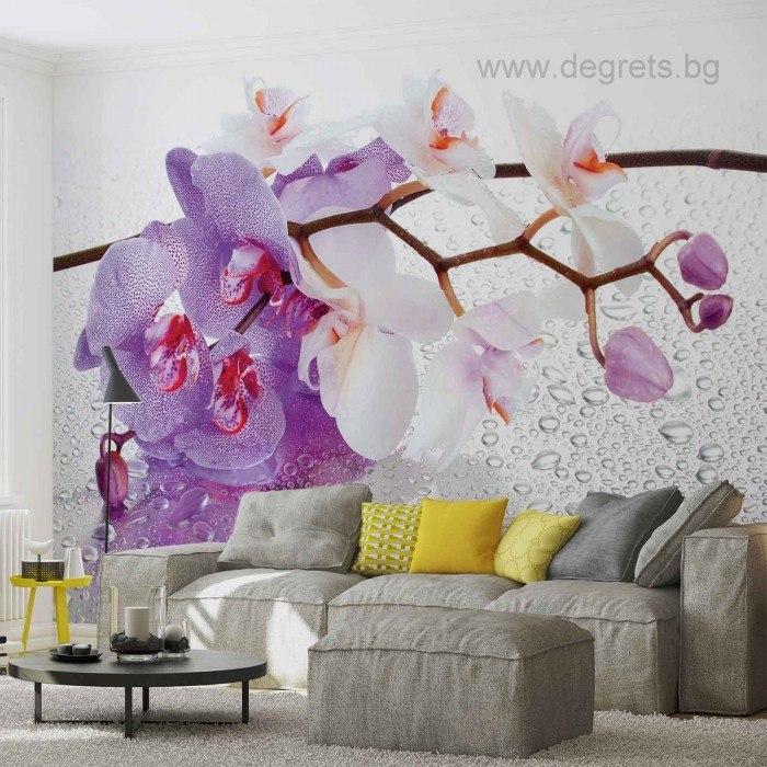 Фототапет Орхидеи циклама 2