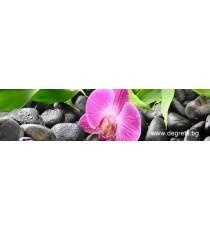Пано Орхидея 2