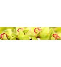 Пано Орхидея 10