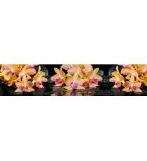 Пано Орхидея 12