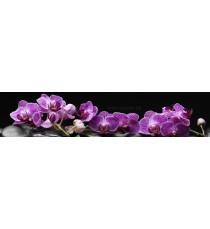Пано Орхидея 14