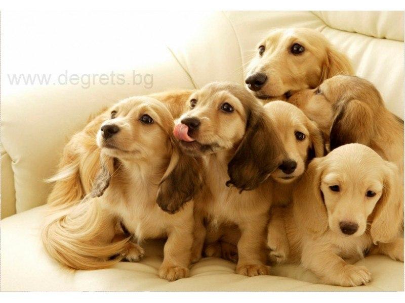 Фототапет флис Кученца