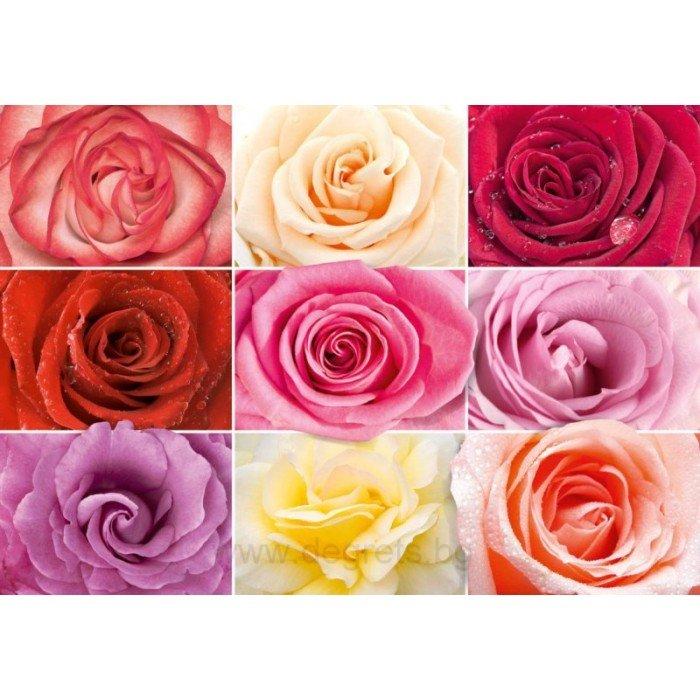 Фототапет Цветни рози