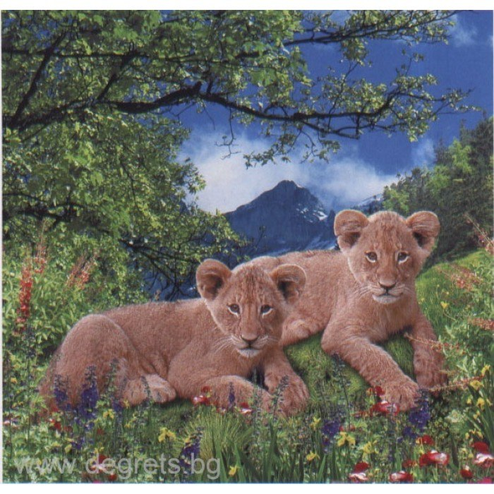 Фототапет Лъвове