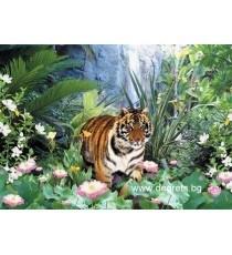 Фототапет Поглед от тигър